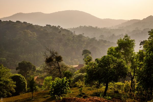 View of Coorg forest