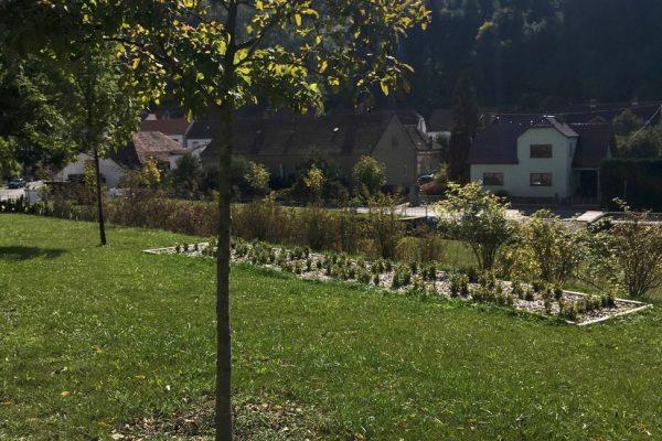 Commemorative stone and tree of MF CR